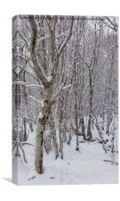 Birch Trees in the Snow, Canvas Print