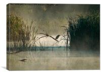 Green Heron in the early morning mist, Canvas Print