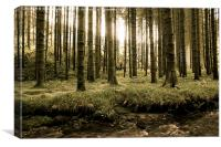 Mystic Woodland, Canvas Print