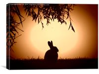 evening bunny, Canvas Print