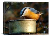 nuthatch bird, Canvas Print