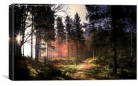 Sunset forest, Canvas Print