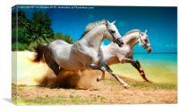 horses and beach, Canvas Print