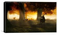 Forest deer and mist, Canvas Print