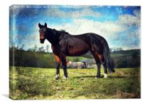 Horse in a field, Canvas Print