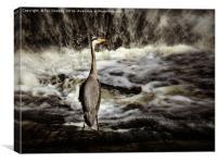 Grey heron, Canvas Print