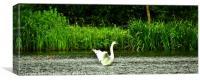 Swan on the lake, Canvas Print