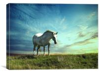 White horse on the hill, Canvas Print