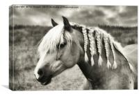 Countryside Horse, Canvas Print