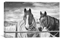 Horses in birtle lancashire, Canvas Print