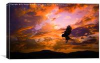Kestrel Bird Of Prey, Canvas Print