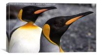 King Penguins, Canvas Print