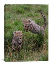 Cheetah Cubs Playing, Canvas Print