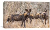 Wild Dog Family Portrait, Canvas Print