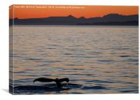 Baja Whale Sunset, Canvas Print