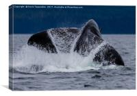 Whale Tail, Canvas Print