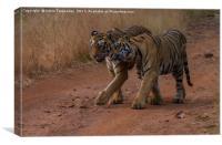 Tigers Tadoba, Canvas Print