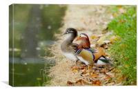 Mandarin Duck Pair, Canvas Print