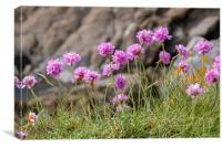 Purple thrift on Cornish cliffs, Canvas Print