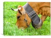 Swiss cow with cowbell in a Swiss meadow, Canvas Print