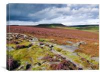 Peak Distict heather moors near Hathersage, Canvas Print
