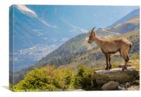 Ibex looking down on Chamonix, Canvas Print