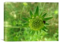 Macro green plant, Canvas Print