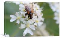 Bug on flower, Canvas Print