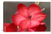 Pretty red flower, Canvas Print