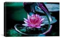 Waterlily, Canvas Print