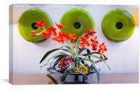 Orchids                                   , Canvas Print