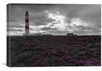 Tarbat Ness Lighthouse Amongst the Heather , Canvas Print