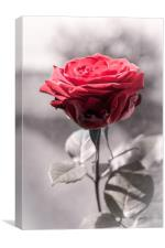 Red Is The Rose, Canvas Print