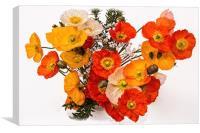 Vibrant Multi Coloured Poppies, Canvas Print