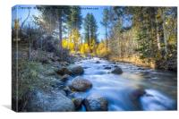 Sierra Mountain Stream, Canvas Print