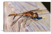 Toxic Orange Dragonfly, Canvas Print