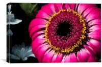 Flower Full of Colour, Canvas Print