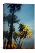 Palms at dusk, Canvas Print