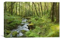 Stream In The Forest, Canvas Print