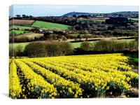 A Host of Golden Daffodils, Canvas Print