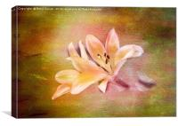 Painted Lily, Canvas Print