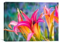 Carnival Lilly , Canvas Print