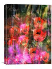 Wild Poppies , Canvas Print