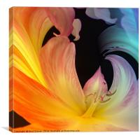 The colours of Lily , Canvas Print