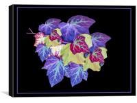 Ivy, Canvas Print