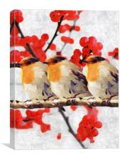 Three Little birds, Canvas Print