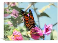 Puerto de la Cruz, Butterfly , Canvas Print