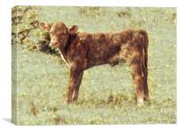 Calf, Canvas Print