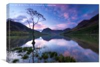 Buttermere tree, English Lake District., Canvas Print