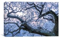Hoar frost on Twisted branches, Canvas Print